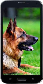 HD Amazing German Shepherd Wallpapers • Pets Dogs screenshot 2