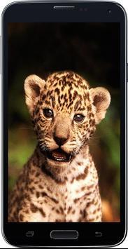 Amazing HD Jaguar Wallpapers - Cougar screenshot 1
