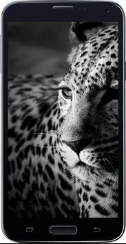 Amazing HD Jaguar Wallpapers - Cougar screenshot 2