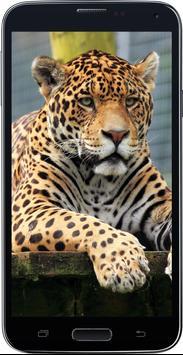 Amazing HD Jaguar Wallpapers - Cougar screenshot 3