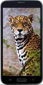 Amazing HD Jaguar Wallpapers - Cougar screenshot 4