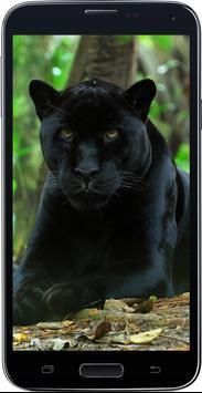 Amazing HD Jaguar Wallpapers - Cougar screenshot 5