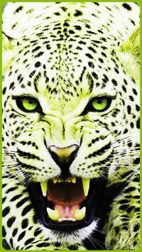 HD Colorful Tiger Wallpapers - Jaguar screenshot 1