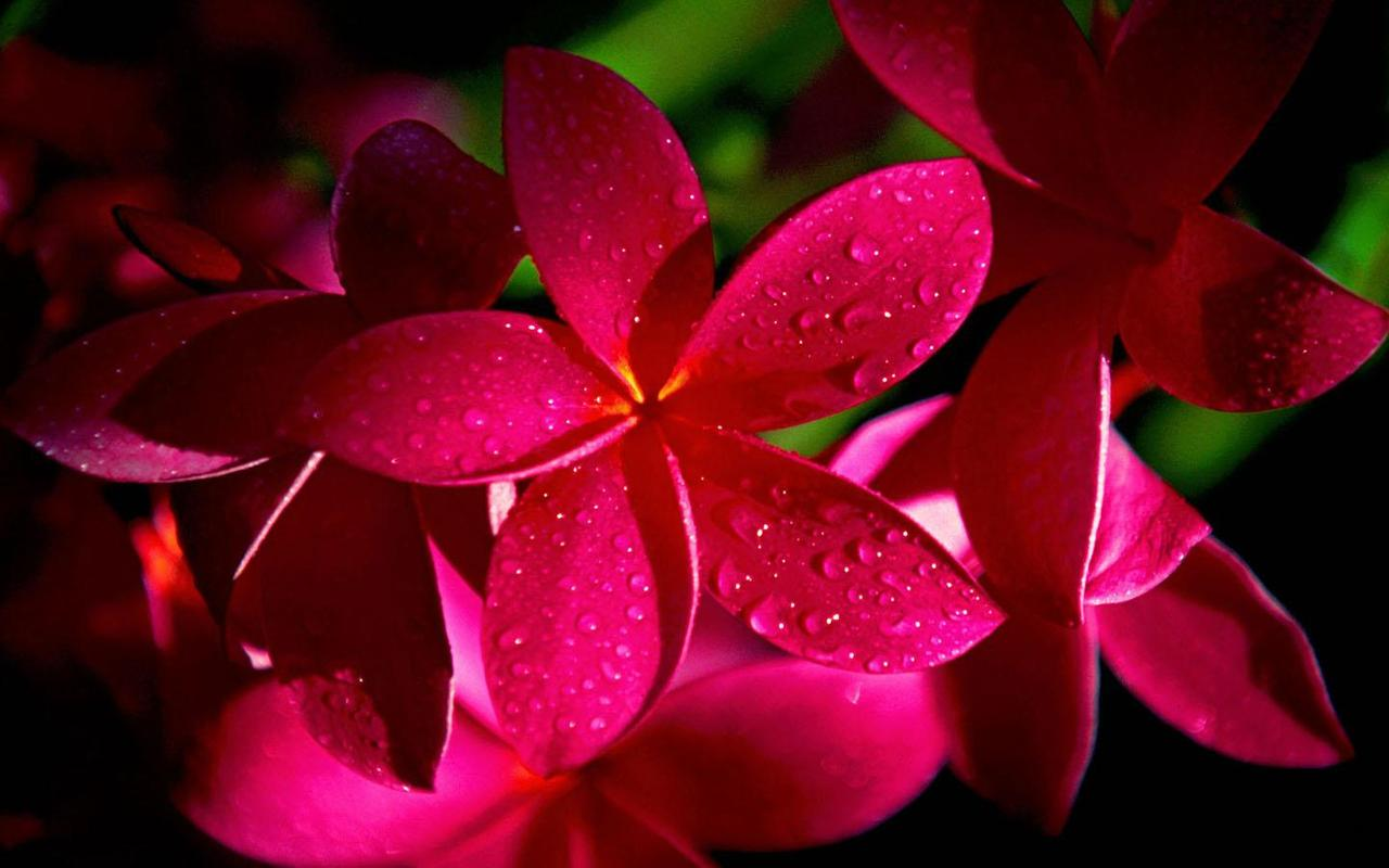 flowers wallpaper apk download - free personalization app for