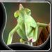 Camaleón fondo pantalla vivo