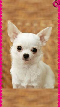 Chihuahua Zipper Lock Screen apk screenshot