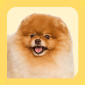 Pomeranian Care Tips icon