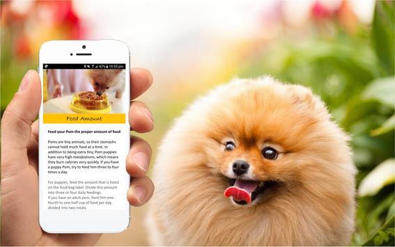 Pomeranian Care Tips screenshot 2
