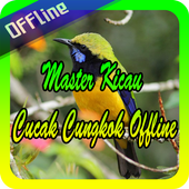 Master Kicau Cucak Cungkok Offline icon