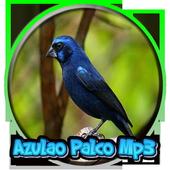 Azulao Palco Mp3 icon