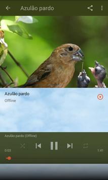 Azulão Canto Fibra screenshot 3
