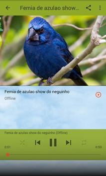 Azulão Canto Fibra screenshot 7