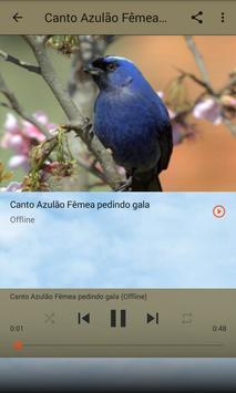 Azulão Canto Fibra screenshot 5