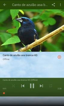 Canto do Azulão (Cyanocompsa Brissonii) apk screenshot