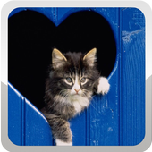 Cat Wallpapers icono