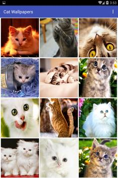 Cat Wallpapers постер
