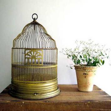 Old Bird Cage Decorating Ideas apk screenshot