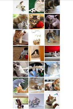 Cat Zone screenshot 1
