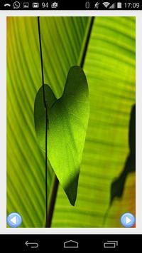 Green Wallpapers Deluxe apk screenshot