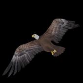 刪除Eagle Drop (free) icon