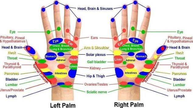 Acupuncture points chart for android apk download