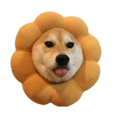 Unlimited Shiba Inu Pictures icon