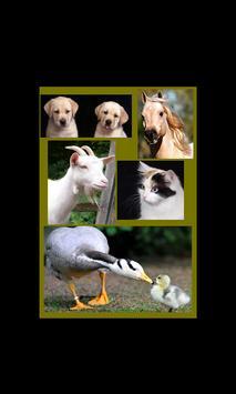 Kids Zoo,Animal Sounds & Photo poster