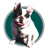 Adestramento de cães icon