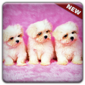 New Cute Little Puppies Wallpapers HD icon