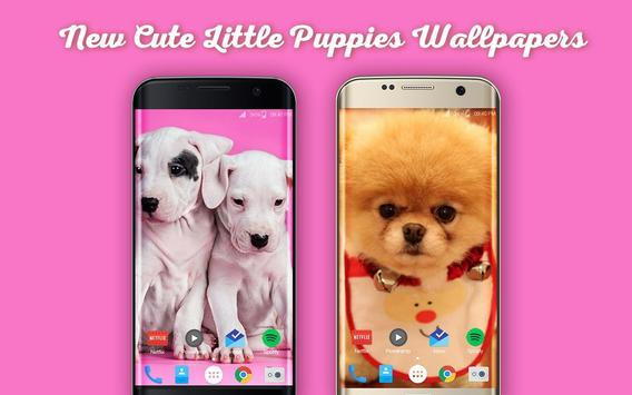 New Cute Little Puppies Wallpapers HD poster