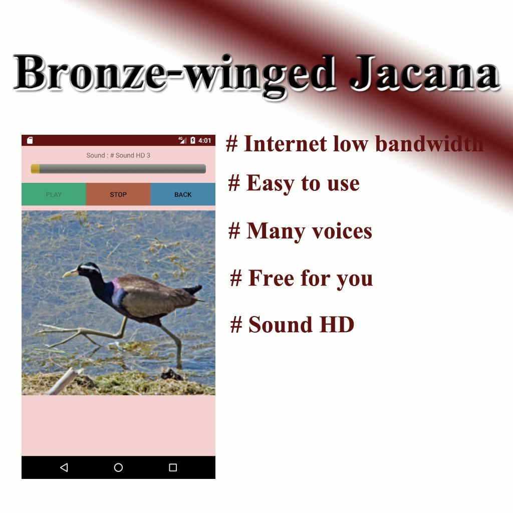 download bird chirping sound