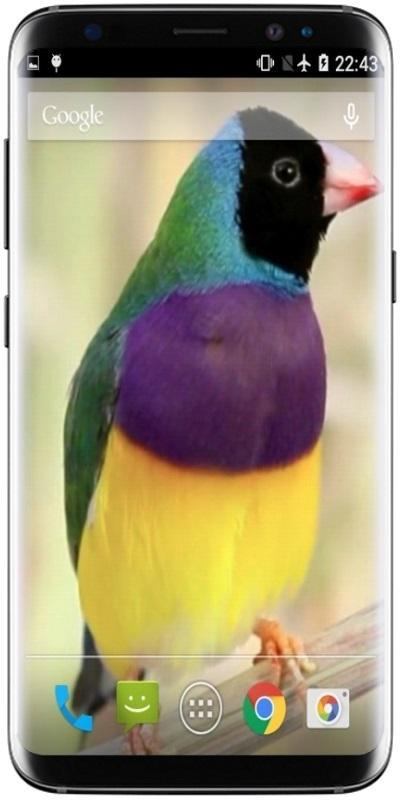 Singing Birds Video Wallpaper for Android - APK Download