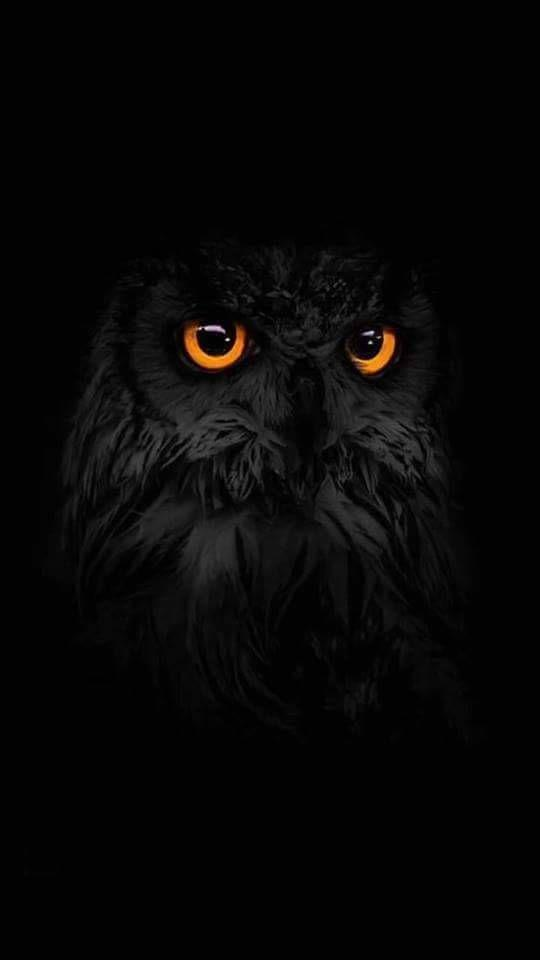 Best Owl Wallpapers Hd 2018 For Android Apk Download