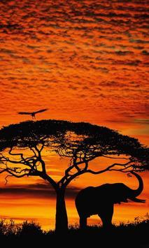 african sunset live wallpaper poster