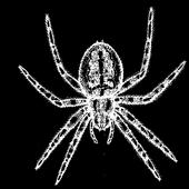 Zombie Spiders icon