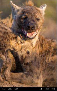 Laughing Hyena Sounds poster