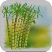 Sugarcane English icon
