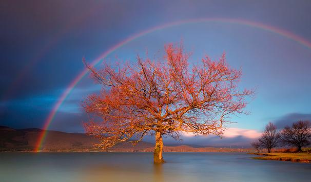 Rainbow Wallpapers HD (backgrounds & themes, 2017) apk screenshot