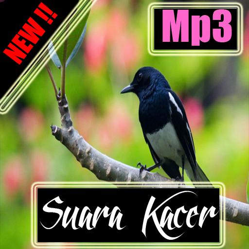 Suara Kacer Mp3 For Android Apk Download