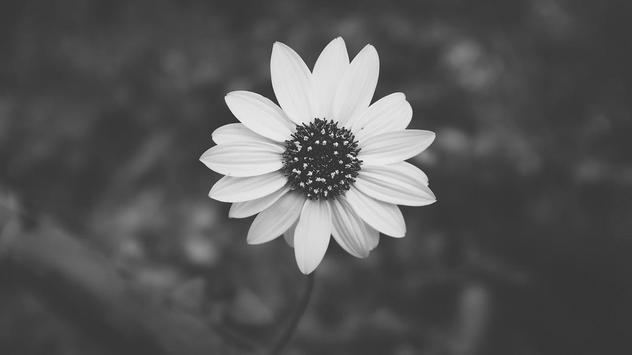 Black And White Wallpaper HD apk screenshot