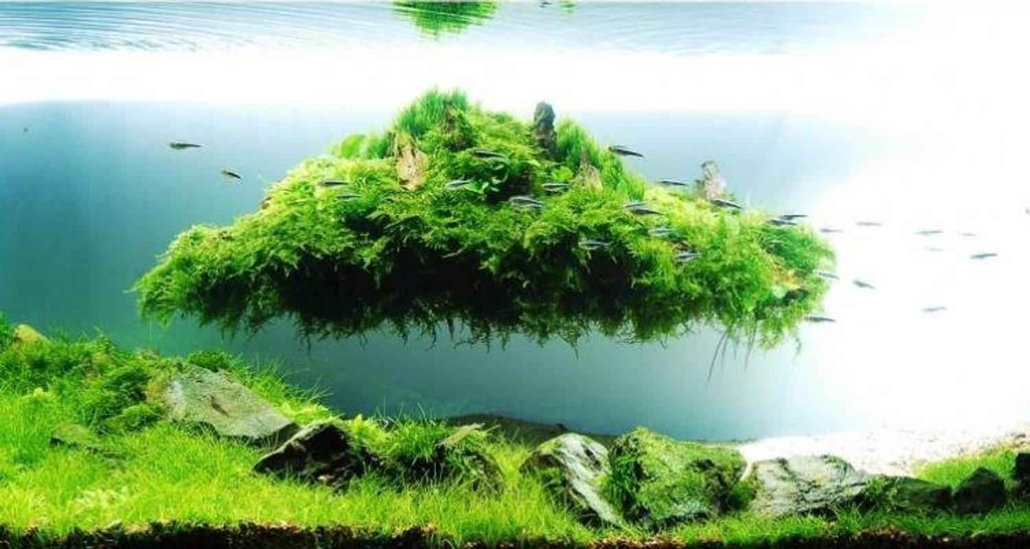 Aquascape Design Gallery for Android - APK Download