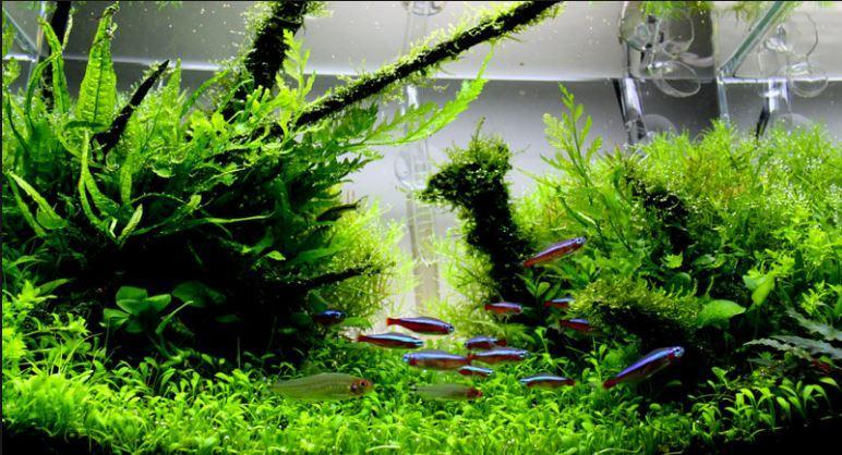 Aquascape Design Galerry For Android Apk Download