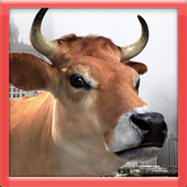3D Cow Game icon