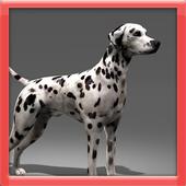 Dalmatian 3D Simulator icon
