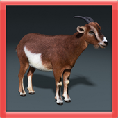 Funny Goat 3D icon