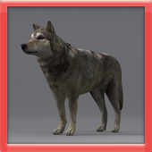 Muscle Wolf Simulation icon