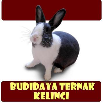 Budidaya Ternak Kelinci poster