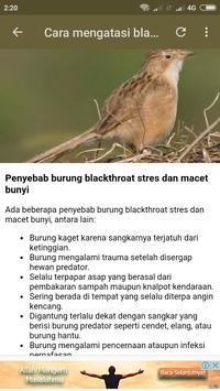 Kicau Burung Blackthroat screenshot 6