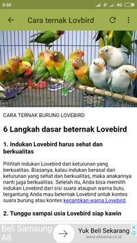 Kicau Lovebird Jawara screenshot 4