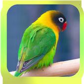 Sound of Lovebird icon